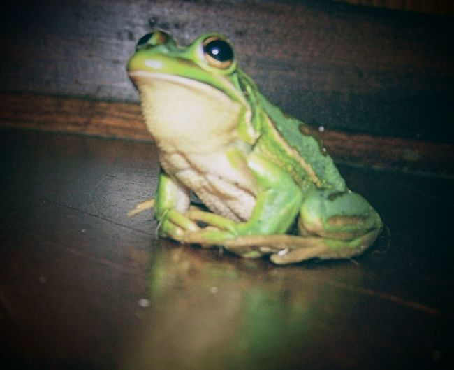 Our frog which