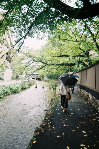 Kyoto, river, street, Japan Japan Canon Kyoto Umbrella Tree Protection Real People Plant One Person Walking Women Nature Day Water Lifestyles Rain