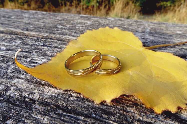 Autumn wedding invite with gold rings Rings Leaf Nobody Hochzeitseinladung Wedding Wedding Rings Hochzeit Autumn Fall Autumn Wedding Wedding Invitation Ring Jewelry Wedding Ring Love Positive Emotion Wedding Gold Colored Close-up Yellow No People Gold