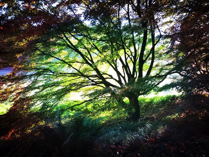 Baum Automn Herbst Colourd Tree Tree Tree Growth Nature Beauty In Nature Outdoors No People Forest