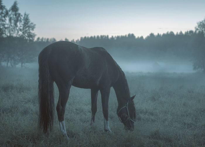 Close-Up Of Horse Grazing On Field Against Sky
