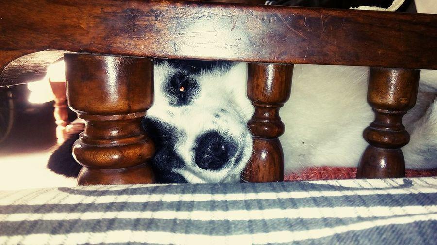 Black And White Dog Peeking Eyes On You Patterned Wood