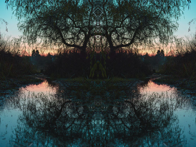 A doubled reflection Tree Water Plant Reflection Nature Tranquility No People Beauty In Nature Waterfront Sky Lake Scenics - Nature Tranquil Scene Symmetry Forest Dusk Silhouette Growth Outdoors Digital Composite Trout Lake