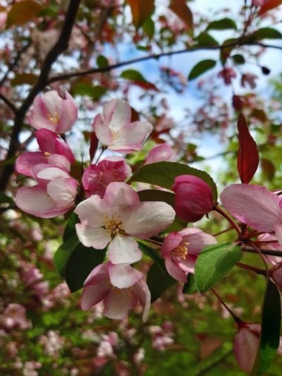 Flower Plant Flowering Plant Beauty In Nature Fragility Growth Freshness Vulnerability  Petal Pink Color Close-up Flower Head No People Day Focus On Foreground Nature Outdoors