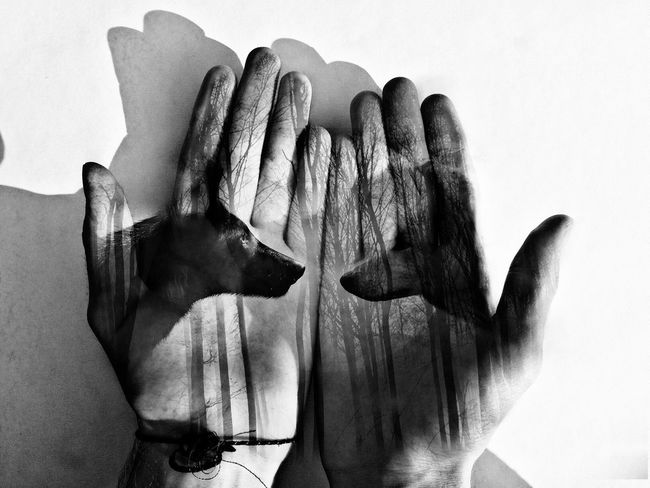 Wolfs  Blackandwhite Blackandwhite Photography Hand Picture In The Hand Wolfes In My Hands White Background Edited