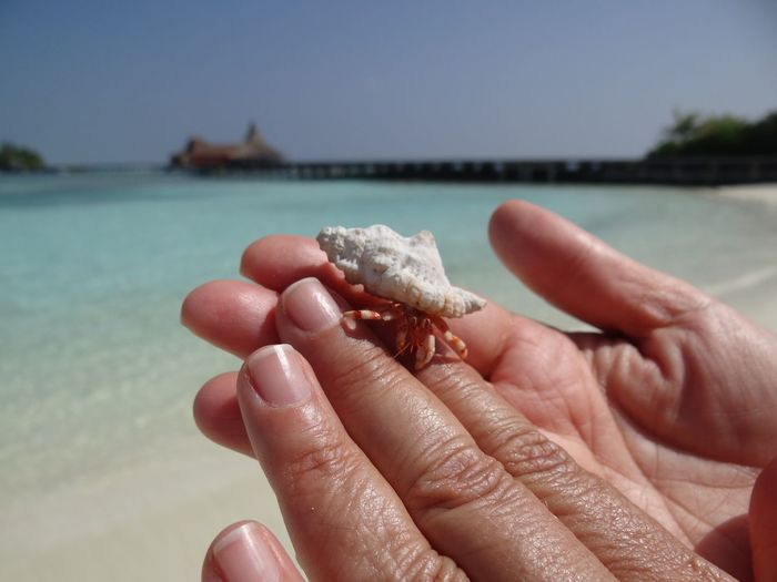 Close-up of hermit crab on hand at beach