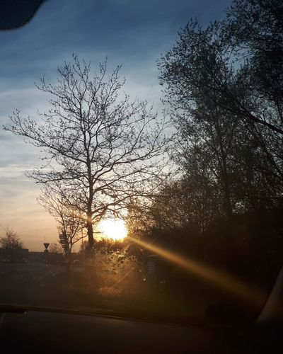 Tree Sunset Rural Scene Sunlight Silhouette Sky Landscape Cloud - Sky Shining Atmospheric Mood Flock Of Birds Sun Foggy Sky Only Dramatic Sky Moody Sky Storm Cloud Cloudscape Meteorology Thunderstorm Lightning Storm Heaven Geese Avian Migrating Cumulus Single Tree Streaming Forked Lightning