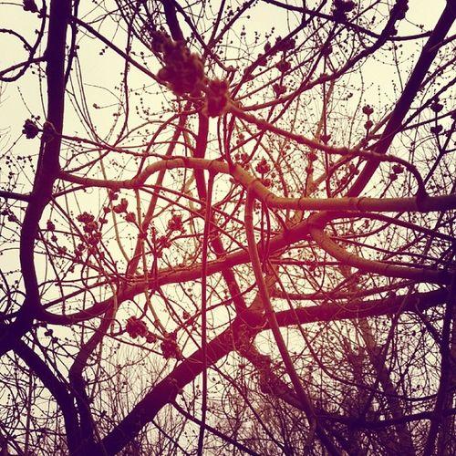 Neuron Web Moscov Spring springiscoming moscovspring tree trees sky brain sad