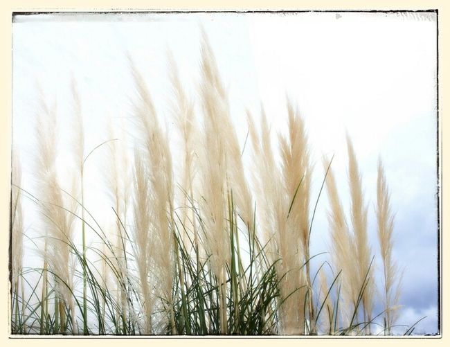Windless Simple ♥ Textures