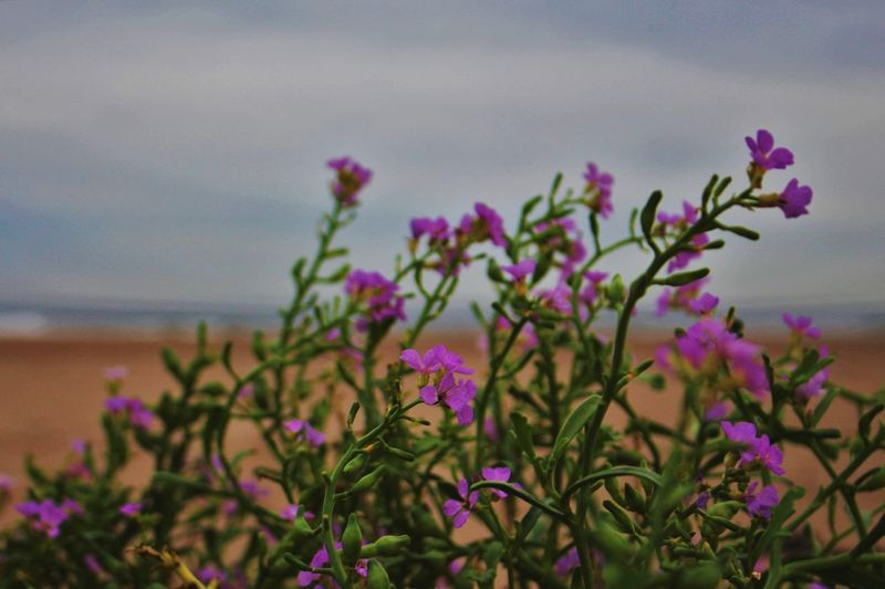 Close-up of flowers blooming by sea against sky