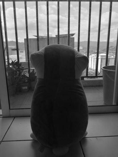 Nyanko sensei thinking about the past Blackandwhite Balcony Nyanko Anime Animecat Indoors  Window No People Cage One Animal Day Animal Themes EyeEmNewHere