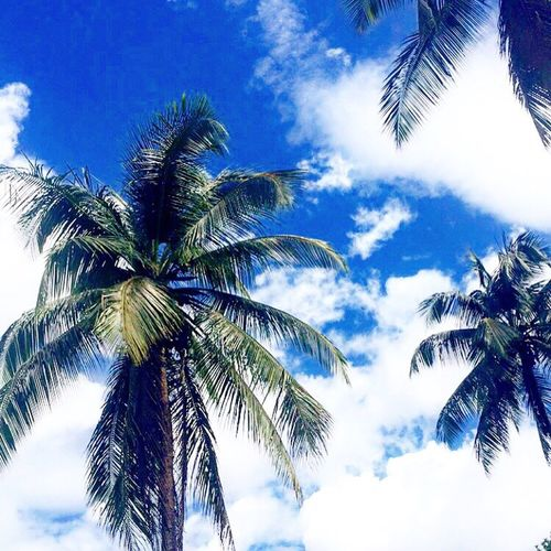 Palm Trees Holidays