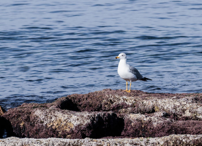 Seagull perching on shore