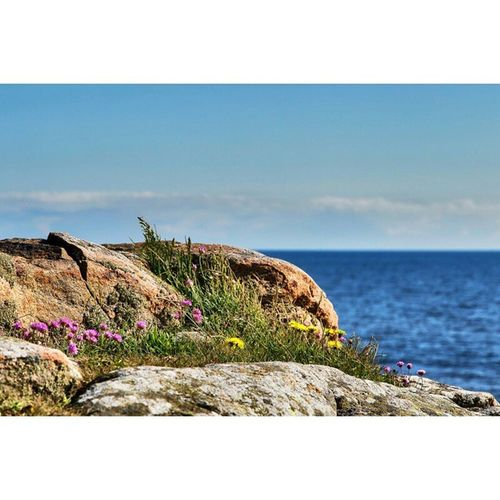By the sea Nature_pd Nature_perfection Nature Phototag_it Photooftheday Fotofanatics_nature_ Foto Fotoutmaningenna Fotoäventyr Fotografia Ig_nature Ig_hdr Hdrstyles_gf Hdr_lovers Hdr_pics Hdr_captures Tidningensydväst Canon