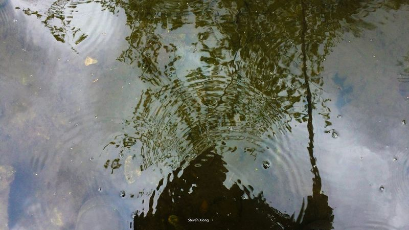 Find the turtle. Have you seen it. Let me know. Water_collection Water Reflections Reflection Eyes Are Soul Reflection Gone Fishing My Hobby Share Your Adventure The Traveler - 2015 EyeEm Awards Reverse Selfie