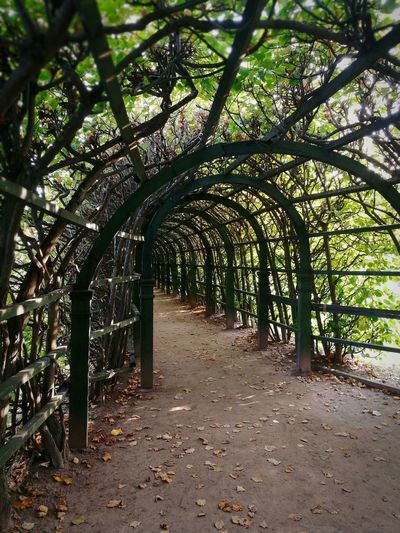 Walkway amidst trees during autumn