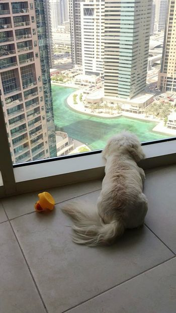 My daughters dog also Teddy. Dubai