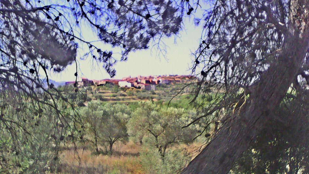 Mi Pueblo.Lledo. Rural Scenes Relaxing OpenEditCreativ El Cielo Y La Tierra EyeEm Gallery Natural Beauty EyeEm Best Shots - Nature EyeEm Nature Lover
