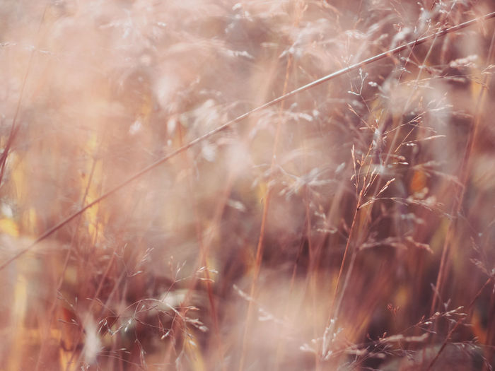 Autumn grass Plant Nature Selective Focus Close-up No People Growth Day Fragility Beauty In Nature Tranquility Field Sunlight Dry Backgrounds Softness Focus On Foreground Botanical Autumn Autumn colors Grass Bokeh Seeds