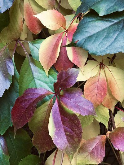 Full frame shot of pink leaves