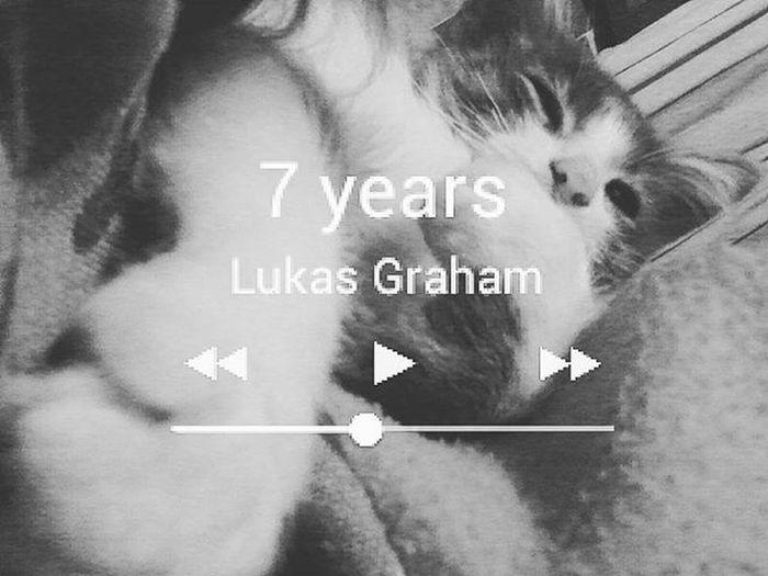 😽7years Lukasgraham Cat