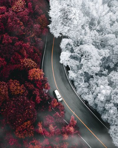 High angle view of car on road amidst trees