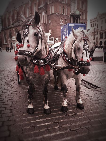Majestic Animals Horse Drawn Carriage Horses Love Fairytale  Horsedrawn