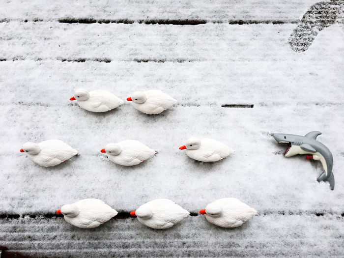 High Angle View Of Toy Ducks And Shark On Snow