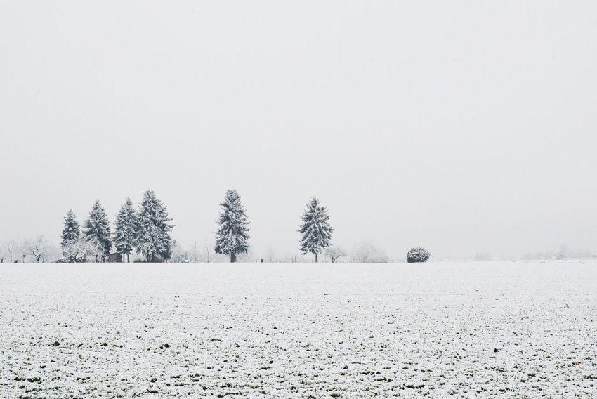 Winterisokay