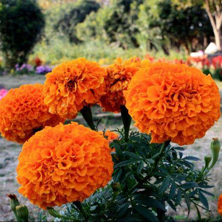 Canoneos450D Flower Orange Irfan Nature Green Fb Instagram Instaflower 5foru Photography Friends Lens Ranchi