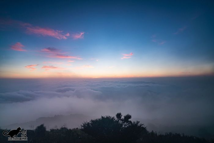 Sky Tree Beauty In Nature Nature Tranquil Scene Scenics Sunset Tranquility Cloud - Sky No People Outdoors Silhouette Day Sunrise Hong Kong Tai Mo Shan A Sea Of Clouds   Sony A7RII SEL1635F4ZA
