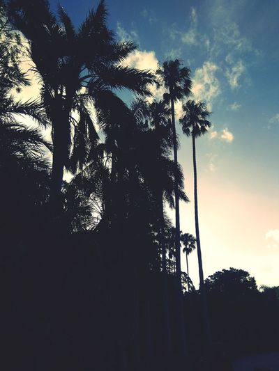 Tree Silhouette Low Angle View Sky Cloud - Sky No People Outdoors