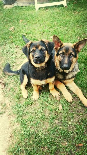 Mydogs