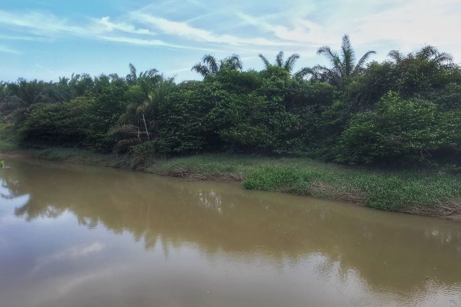 Sungai Johor River Tree Sky Nature Water Reflection Tranquility No People Tranquil Scene Growth Scenics Beauty In Nature Day Outdoors Cloud - Sky Palm Tree Landscape