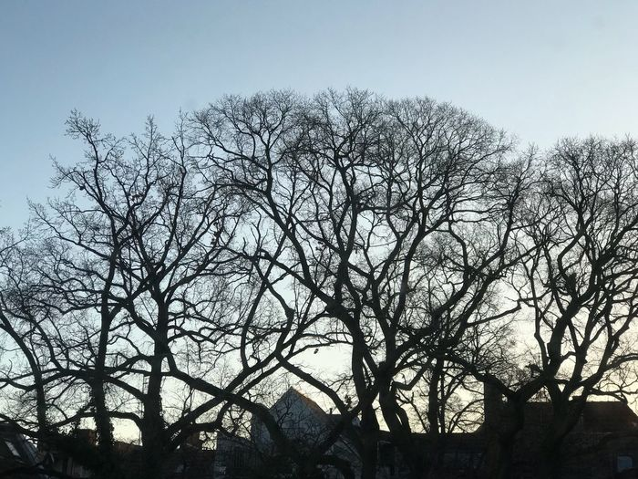 Morning trees Tree Bare Tree Low Angle View Branch Outdoors Sky Nature Day Silhouette No People Beauty In Nature Clear Sky