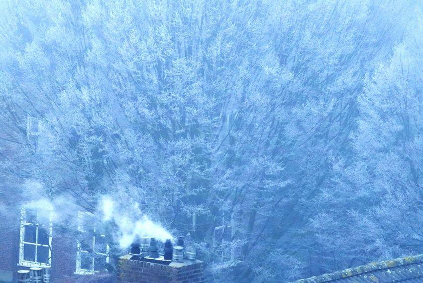 Smokey Chimney Winter Tree Hometown EyeEmNewHere Nikkon
