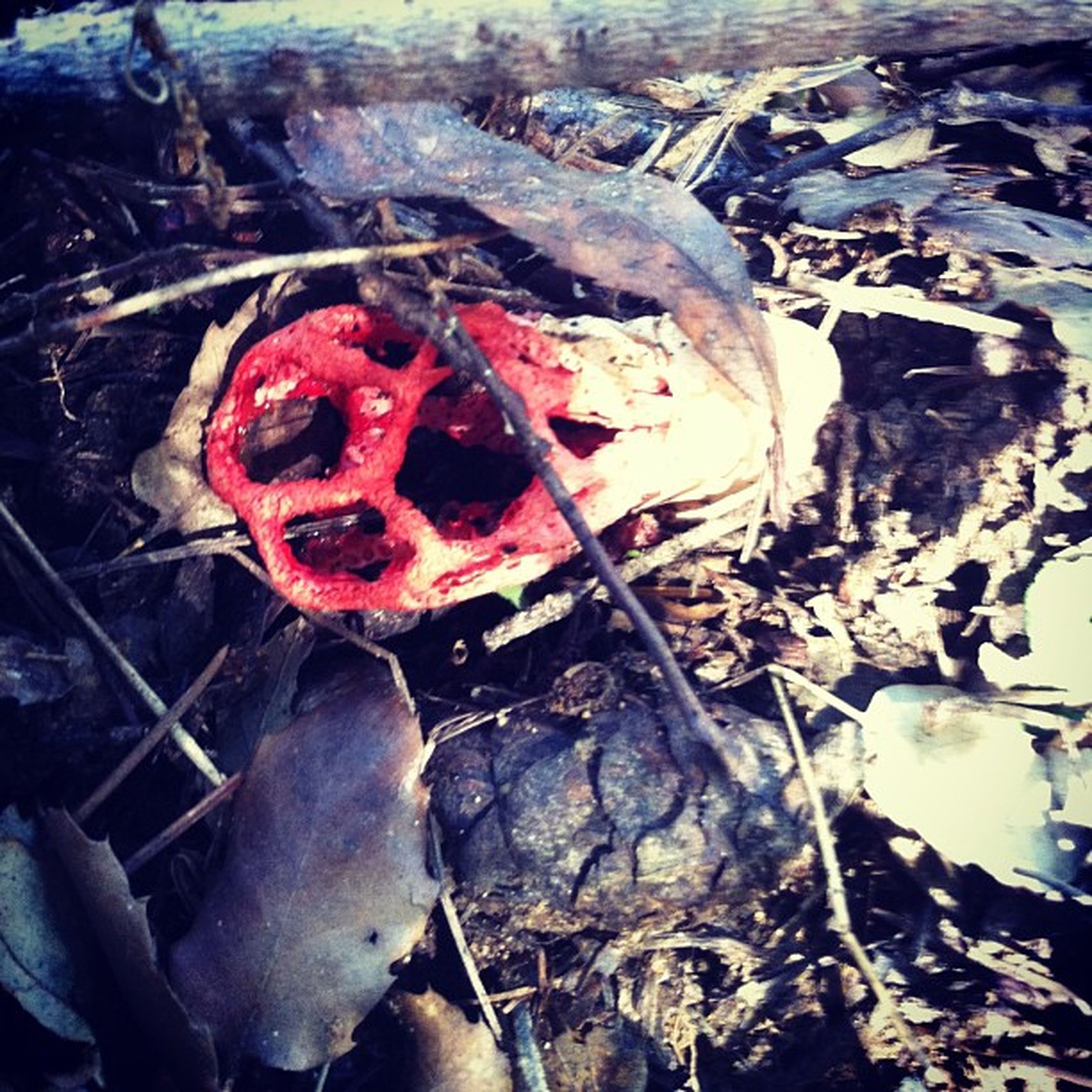 close-up, red, high angle view, damaged, day, abandoned, outdoors, no people, mushroom, messy, fungus, field, food and drink, metal, deterioration, broken, freshness, nature, food, burning