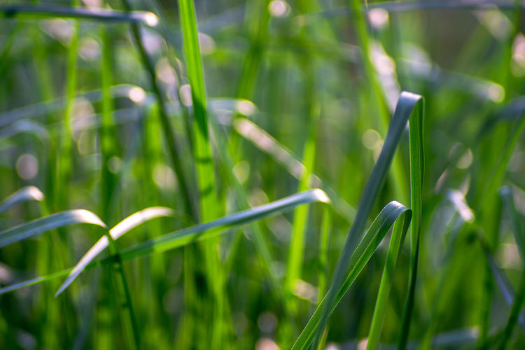 Growth Plant Green Color Beauty In Nature Nature Day Close-up Blade Of Grass No People Grass Land Focus On Foreground Field Tranquility Outdoors Selective Focus Bamboo - Plant Freshness Fragility Vulnerability