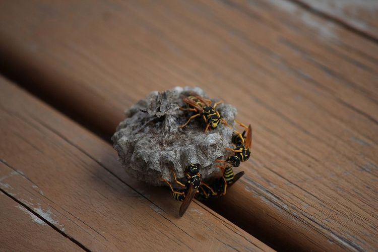 Wasps🐝 Wasp Nest Wood - Material Close-up Animal Themes Table Outdoors Nature No People Animal Wildlife Insect Day