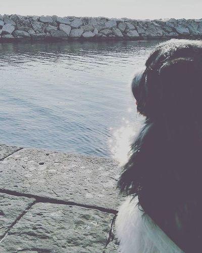 Se guardi negli occhi un cane, come puoi ancora dubitare che non abbia un anima? Fuoriceilsole December Napoli Amicomio Peloso