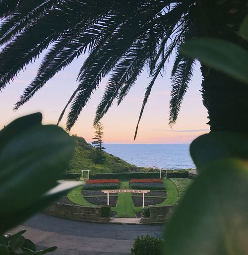 Scene through the trees 🏖🌲 Tree Palm Tree Sea Horizon Over Water Scenics Water Nature Beauty In Nature Sky Tranquil Scene Outdoors Growth Beach Green Color Tranquility No People Tree Trunk Sunset Clear Sky Day Dusk Beautiful Australia Beauty In Nature Plant EyeEmNewHere
