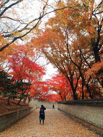 My Best Photo 2014 Having Fun Secret Garden Seoul, Korea Changdeokgongpalace Beautiful Nature Beautiful Autumn Vacation