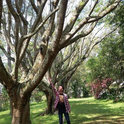 Edisi : JarambahMisteri Pohon besar yg katanya tempat tinggal Kuntilanak.. Ridwanderful JarambahBandung DiBawahLangitBandung BandungIsMe
