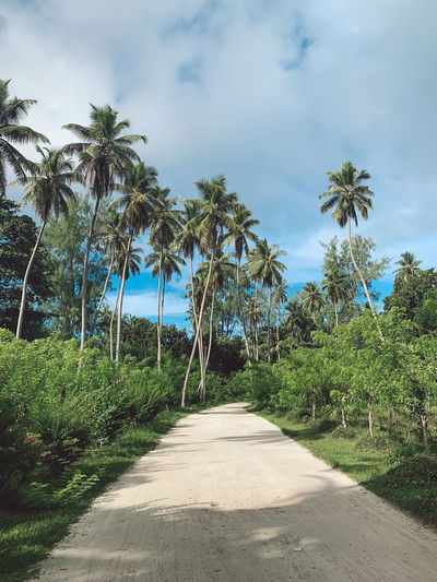 Footpath amidst palm trees against sky