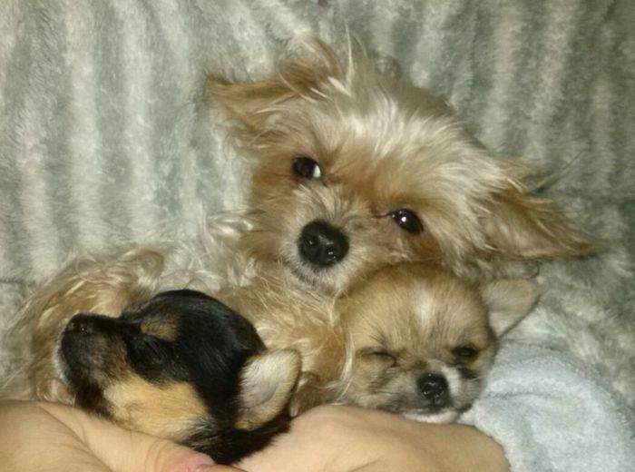 Pets Lying Down Cute