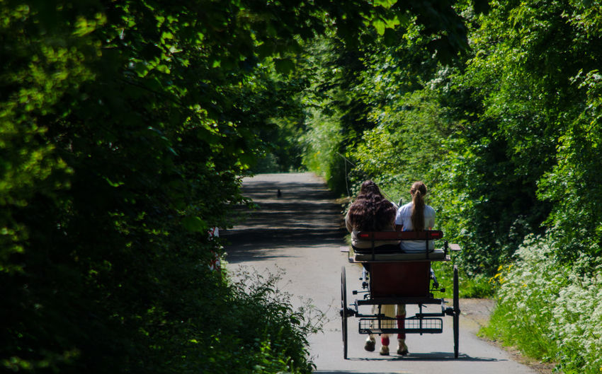 Rear view of friends on horse cart at road