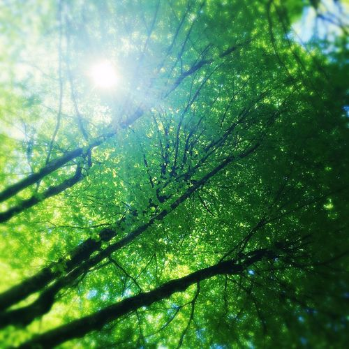 Nature Forest Trees Leaf Roof Sun Landscape