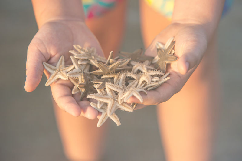 Close-up of person holding starfish