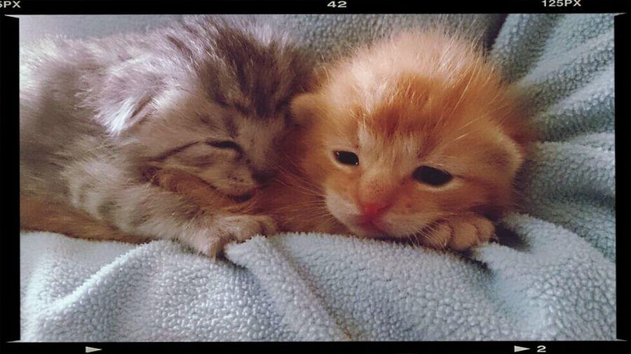 Miezekatze Sweet Dreams Have A Nice Day♥ Omg *_*