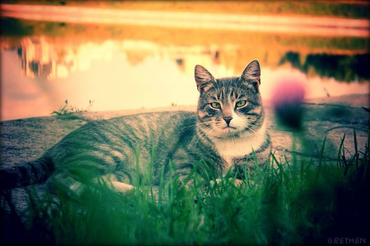 Cat♡ Wild Cat Sweet Lovely Love Animal Mine Grethen_Nahtigall Canon1100d Green Pink
